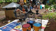 Kicau Mania: Hobi Rakyat Sampai Pejabat, dari Pleci Sampai Cucak Rowo