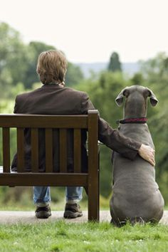 """How did dogs become """"man's best friend?"""" Photo: Thinkstock"""