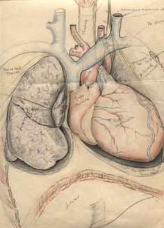 Anatomy at the Bleeding Edge | Historical Collections & Archives ...