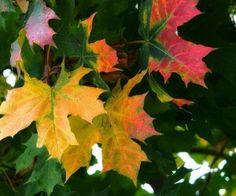 metsä, uusi, väri, kuva, ilme