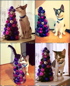 Elvis can't wait for Christmas..