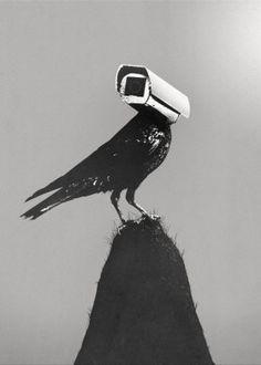 cctv camera surveillance bird crow black white gray