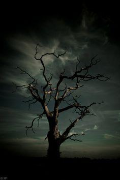 tree in dark Dossier Photo, Cool Pictures, Beautiful Pictures, Arte Cyberpunk, Spooky Trees, Dark Tree, Nature Tree, Dark Forest, Tree Art