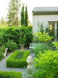 beautiful boxwood