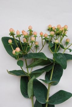 Peach or Pink hypericum berries (Desinger's choice)