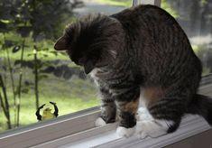 monty python cat gif - Google Search
