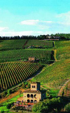 mikicis:  Castello d'Albola vineyard, Radda in Chianti, Tuscany, ItalyLNAG|MVC Foto|Instagram