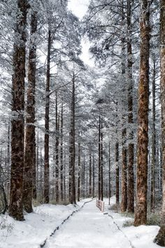 I would love to go snow shoeing in these snowy woods.