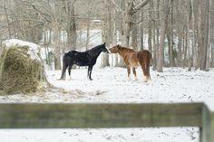 Snow Kisses