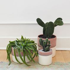 crushing on cacti #SonoraCollection