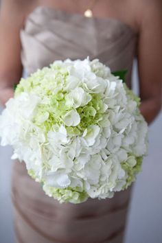 green and white hydrangea