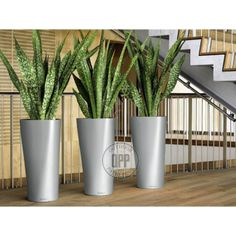 NewPro Containers offers the NEW Lechuza Diamante tall planter at wholesale pricing to the trades. NewPro is a direct supplier of outdoor and indoor Lechuza planters, plant containers, and flower pots. Sansevieria Plant, Sansevieria Trifasciata, Planting Succulents, Potted Plants, Planting Flowers, Tall Planters, Planter Pots, Suculentas Interior, Snake Plant Care