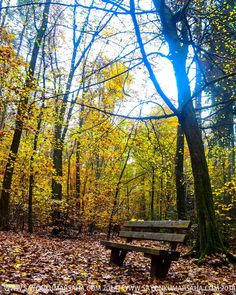 http://ift.tt/1WmiKJf 2014 #rhinelandpfalz #europe #palatinate #forest #hike #fall #europetravel #travel #instatravel #travelgram #vacation #wanderlust #digitalnomad #ilovetravel #travelblogger #travelphotography  #travelingsavant #TheBestDestinations #LiveTravelChannel #Europe_Vacations #Discover_Vacations #travelawesome #lonelyplanet #natgeotravel #bbctravel #tripadvisor #ig_world_colors #germany #EnjoyGermanNature #GermanTourism by crazy_lens