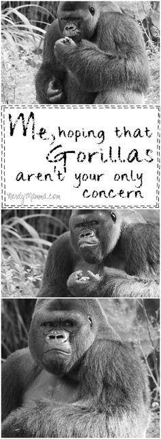 This mom's perspective on this gorilla situation...I kind of agree with her...