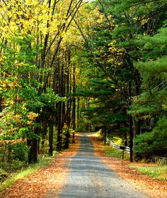 road into the fall woods