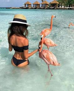 Dream beach in Aruba Pict via Discount code: