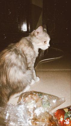 Caption, Random, Cats, Photography, Animals, Instagram, Gatos, Photograph, Animales