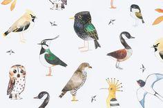 Matt Sewell Bird Illustrations