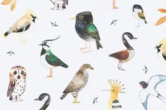 The Art of the Bird Guide @kaufmannmerc