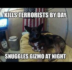 Wicked Training Your German Shepherd Dog Ideas. Mind Blowing Training Your German Shepherd Dog Ideas. Military Working Dogs, Military Dogs, Police Dogs, Military Service, Police Humor, Military Humor, Animals And Pets, Funny Animals, Cute Animals