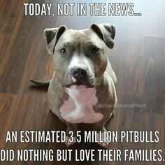 Pitbulls are beautiful and loving dogs! If only everyone could see that and not be stereotypical, they wouldn't be judged so badly. Get to know them before you judge them!!!! Give them a chance