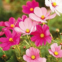 Annual Care Guide Grow beautiful annuals in your gardens with these helpful tips.