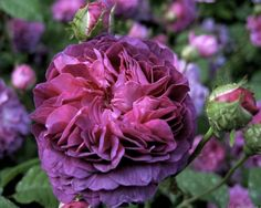 what wonderful purple colors .