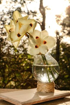 IMG_6467  Vaso com Lâmpada
