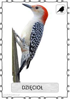 ptak9 Learn Polish, Reggio Emilia, Kids Learning, Montessori, Kindergarten, Homeschool, Cute Animals, Birds, Monet
