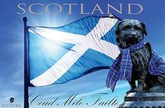 Love our little nation ❤ Via Anna Maria Best Of Scotland, Family Origin, Clan Macleod, Fairy Pools, Ben Nevis, Cairngorms, Oh The Places You'll Go, Homeland, Tartan