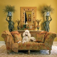 Poodles love comfortable and beautiful style, too!