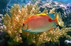 lindos peixes - Pesquisa Google