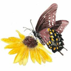 Butterfly and Flower -Garden Nature, Collection Statuette (Affiliate Link) Photo Sculpture, Hipster Art, Nature Collection, Garden Quotes, Garden Signs, Flower Photos, Colorful Flowers, New Art, Flower Art