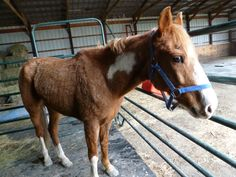 Fantastic was rescued April you can see she is underweight. Cruel People, Horse Rescue, Animals Beautiful, Illinois, Horses, Pictures, Cutest Animals, Photos, Horse