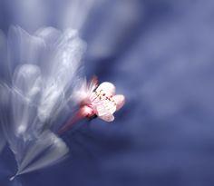 Born of Light by Images ● Fantasy, via Flickr