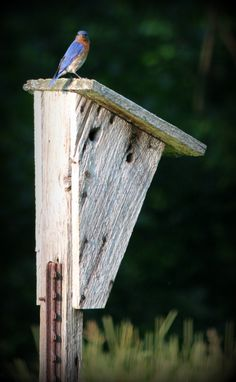 "Read, ""Birds of a Feather"" by Tiffany Greenfield www.eleventhhourfiction.wordpress.com"