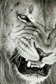 Angry amazing picture