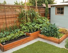 how to grow a food garden in a small space with raised beds - Raised Bed Garden Design Ideas