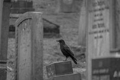 Church Rock Cemetery 19.11.14-47