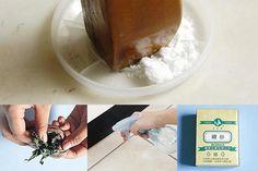 4個輕鬆剋蟑滅蟻好方法 - 品生活 - 好食報 - 台灣好食材 Fooding