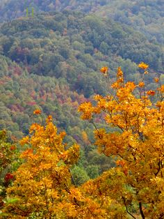 My heart soars in the mountains.  A past photo captured while traveling the Blue Ridge Pkwy near W. Jefferson, NC.