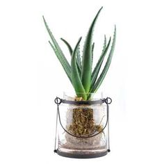 Green aloe plant in lantern glass container – Farmhouse Office Decorating Ideas Art Floral, Decor Pillows, Decorative Pillows, Container Shop, Farmhouse Design, Farmhouse Office, Rustic Farmhouse, Church Events, Art Craft Store