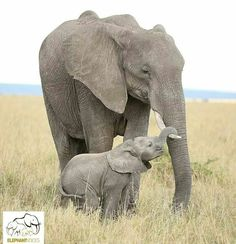 Amazing bond between a mother and her calf ♥