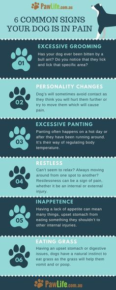 The common signs your dog is in pain can be easier to notice once you know what you are looking for. Here are 6 common signs your dog is in pain.