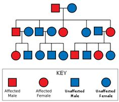 Diagram showing a father carrying the gene and an unaffected mother leading to some of their offspring being affected; those affected are al...