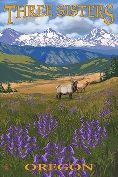 Three Sisters, Oregon - Elk and Flowers - Lantern Press Poster