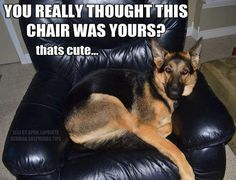 Nope its all his! lol Kennedy has his own chair!!!#german #shepherd #dog