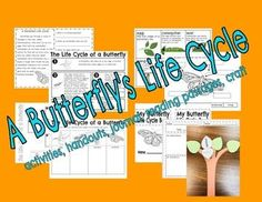 Butterfly Life Cycle, Reading Comprehension Passages, Cut And Paste, Life Cycles, Craft Activities, Classroom Ideas, The Unit, Teaching, Life Cycle Of Butterfly