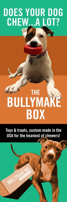Is your dog a POWER CHEWER? The BULLYMAKE Box is a subscription box specifically catered to heavy chewers. We design and manufacture dog toys in the USA and they are all backed by a 14 day guarantee! Each month you'll also receive our USA made all-natura Training Apps, Dog Training Treats, Training Your Dog, Dog Treats, Training Collar, Training Classes, Training Videos, Agility Training, Training Equipment