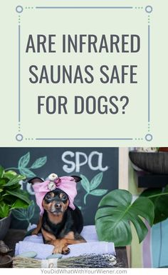 Do you ever wonder if you can bring your dog into an infrared sauna with you? Do you wonder if it's safe? I wondered too and this is what I found out. Infrared Sauna, Pet Health, Your Dog, Best Friends, How To Apply, Canning, Pets, Bestfriends, Animals And Pets